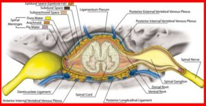 Anatomy of the spinal cord stenosis – brain and spine center